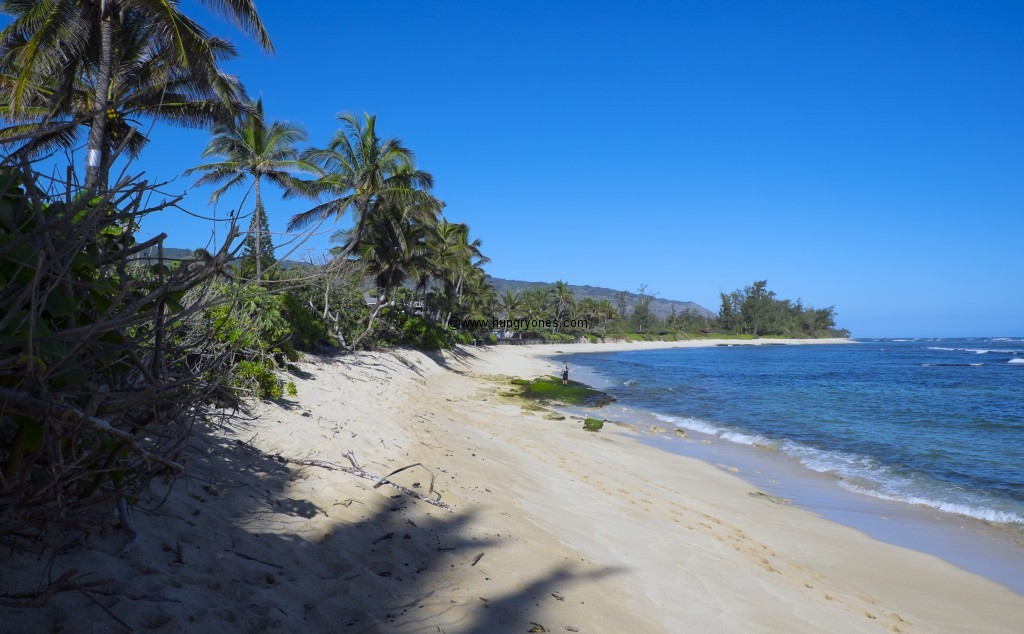 crozier.beach.6946