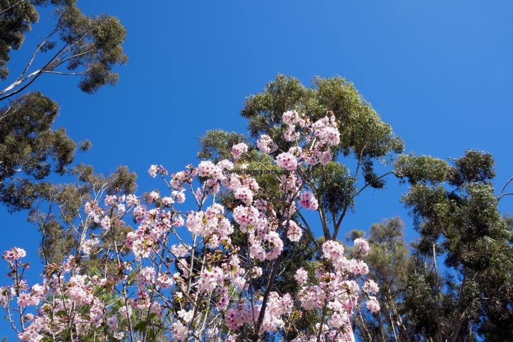 japanese.garden.3663