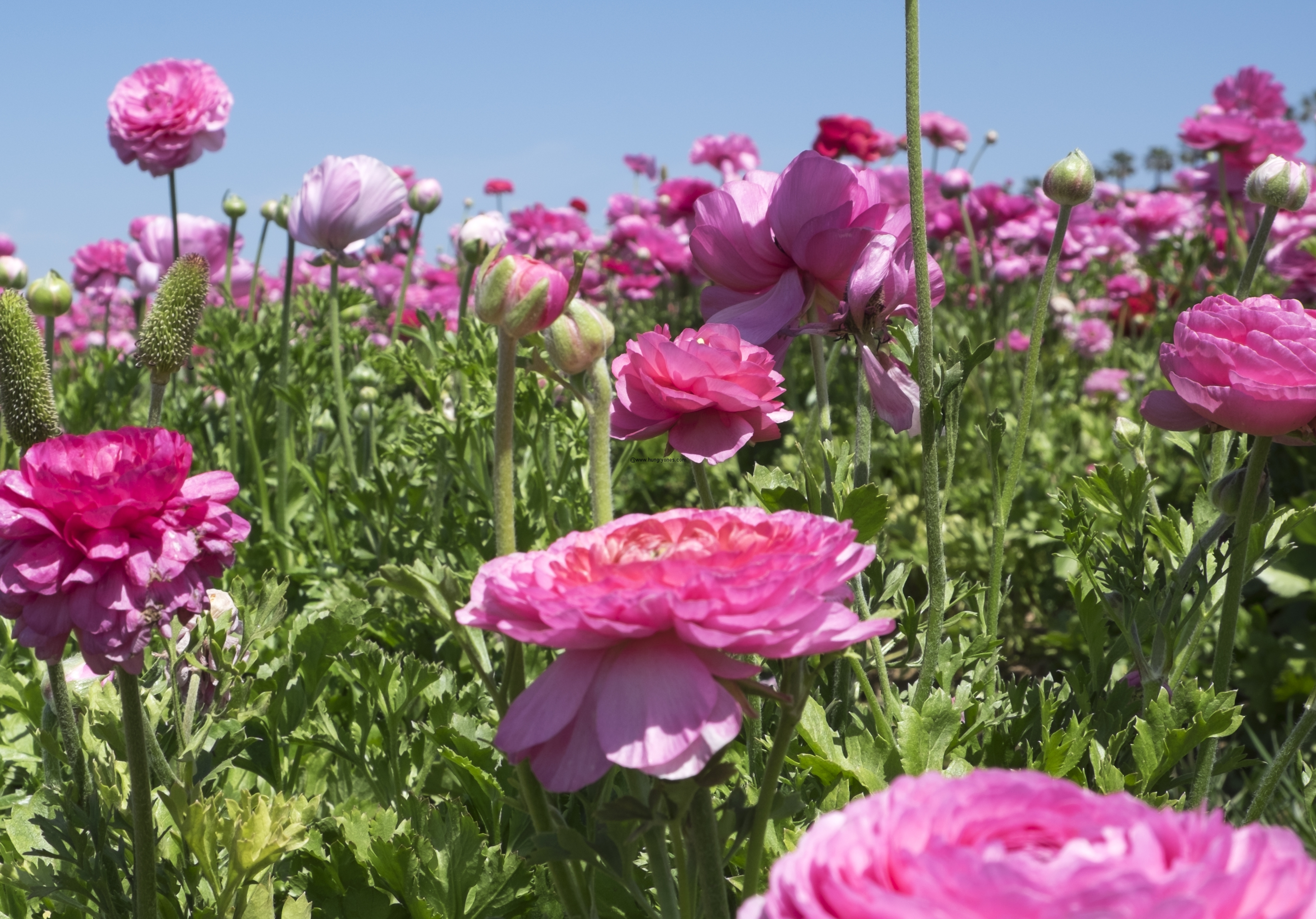 The Flower Fields 5704 Paseo Del Norte Carlsbad CA
