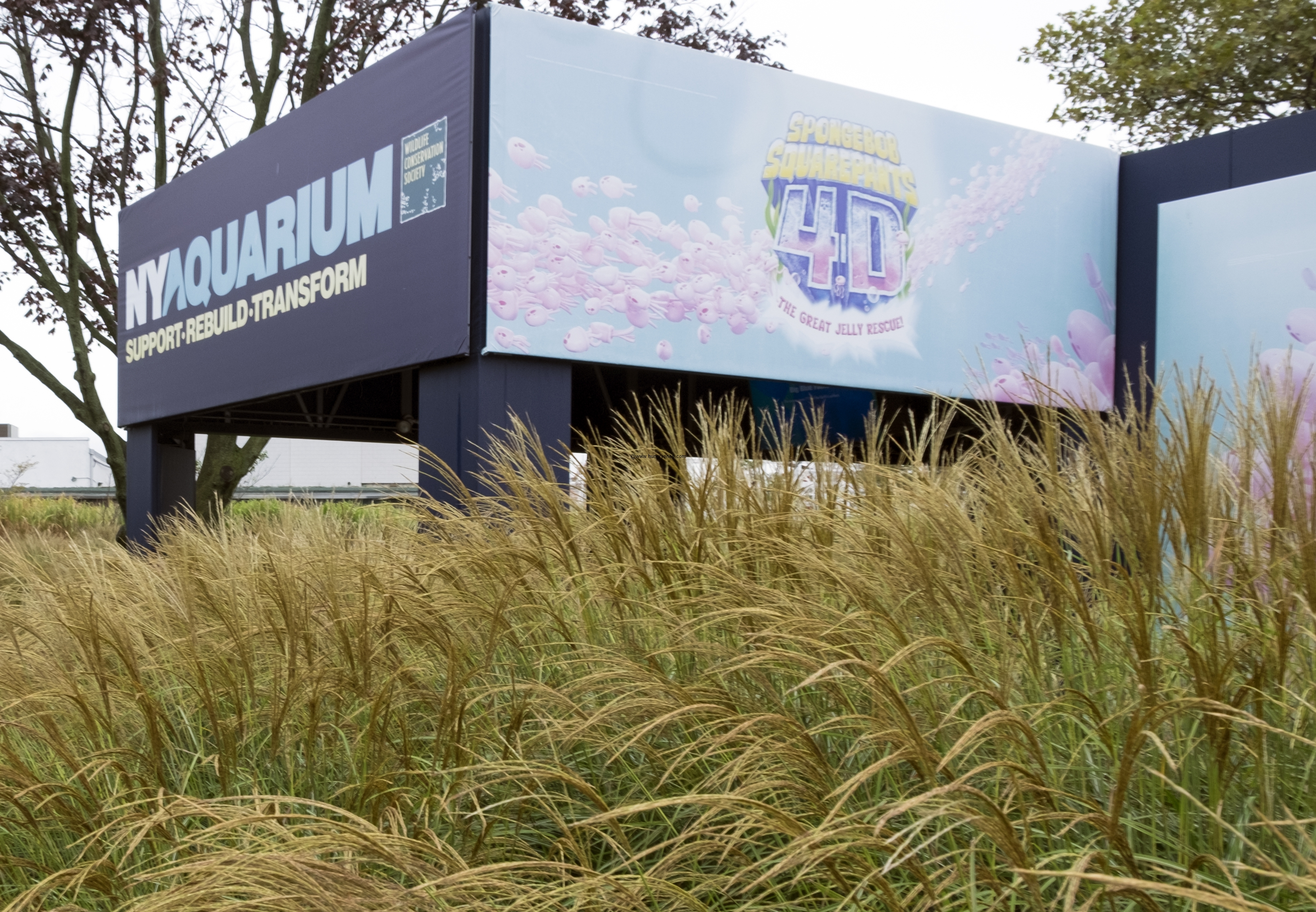 aquarium-ny2551