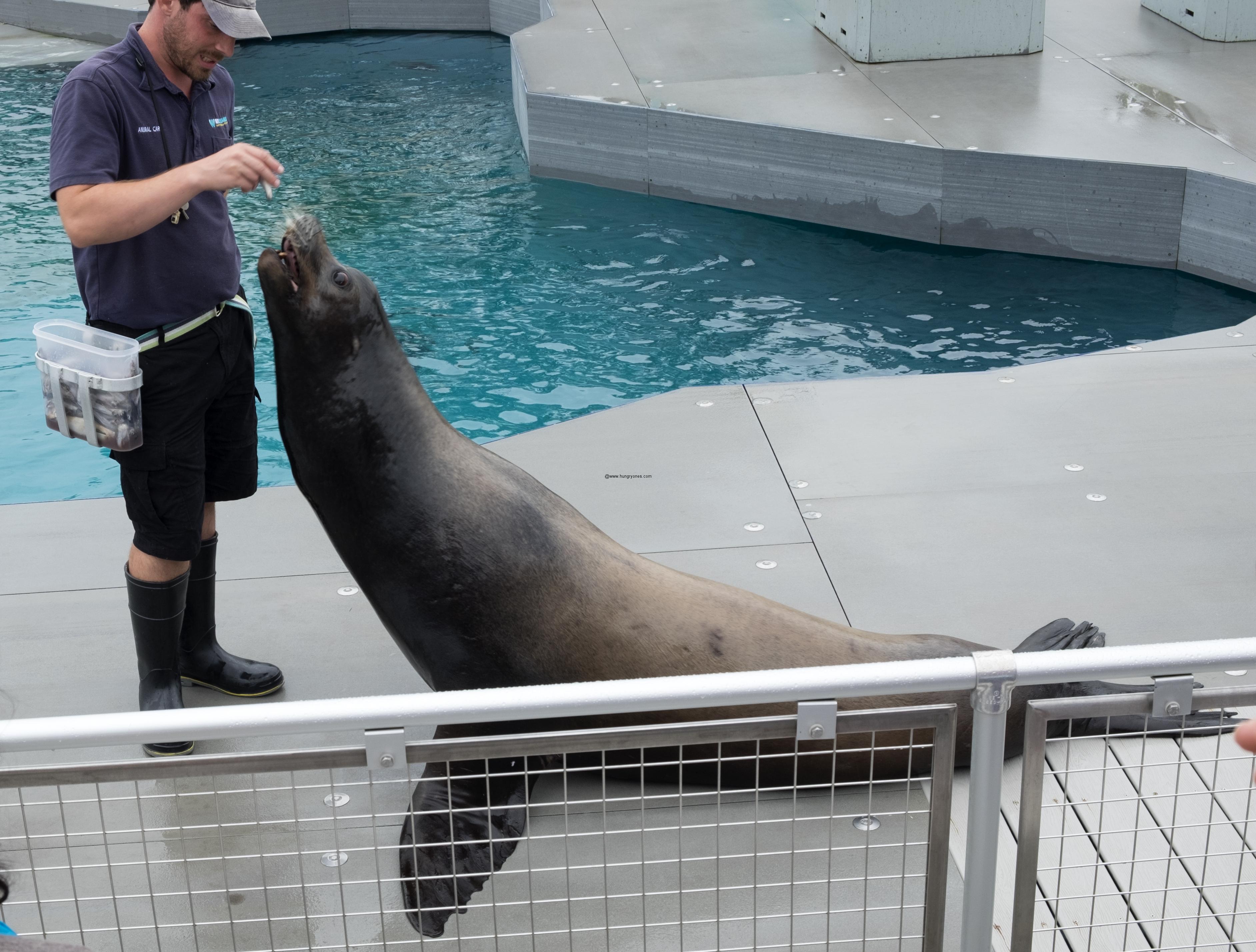 sea-lion-show-aq-ny2531
