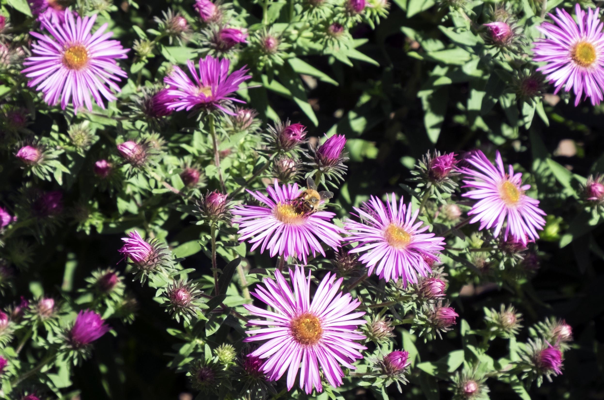 brooklyn-botanical-gardens2879