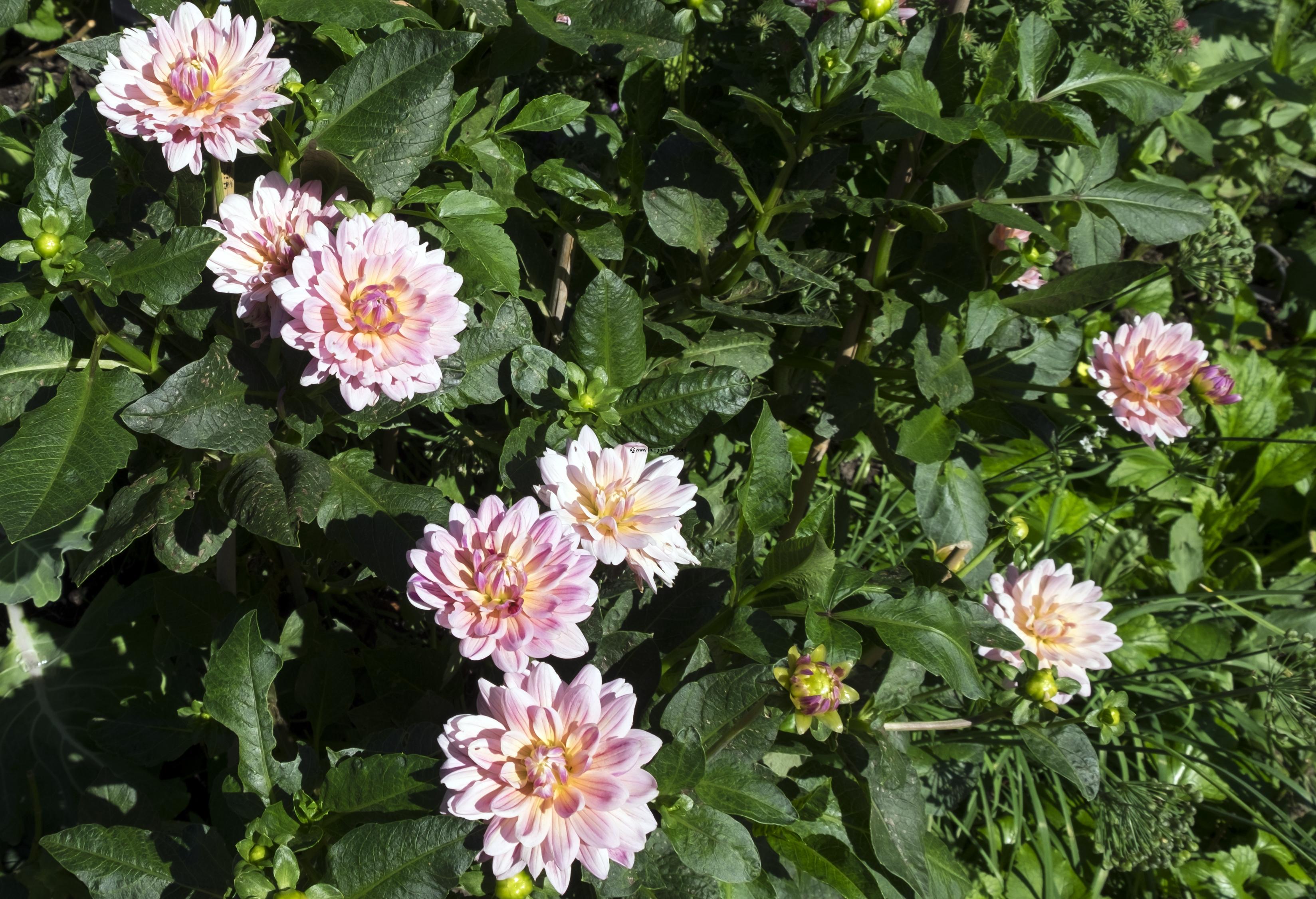 brooklyn-botanical-gardens2890