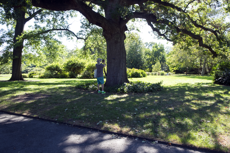 brooklyn-botanical-gardens2922